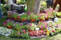 kwiaty,targi,kapele